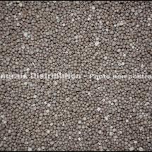 Ammonitrate 27 IMG_5544