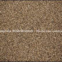 DAP Phosphate ammoniaque IMG_5550